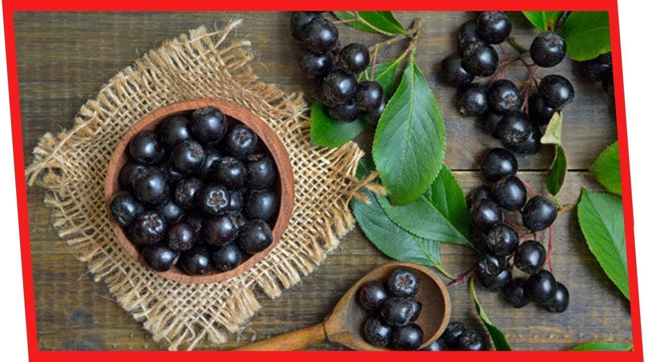 Reverse Diabetes Naturally: 7 Powerful Benefits Of Aronia Berries For Your Health | Nutrition Facts
