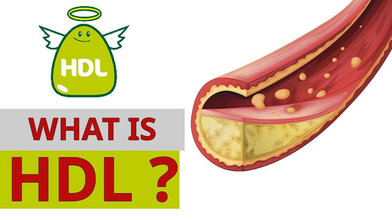 Weight Loss What is HDL Cholesterol?|Natural Health Tips|Natural Health By Michael